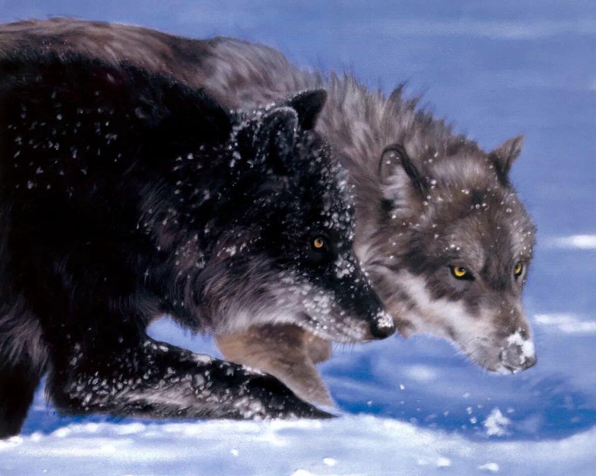 волк черный и белый картинки ткани
