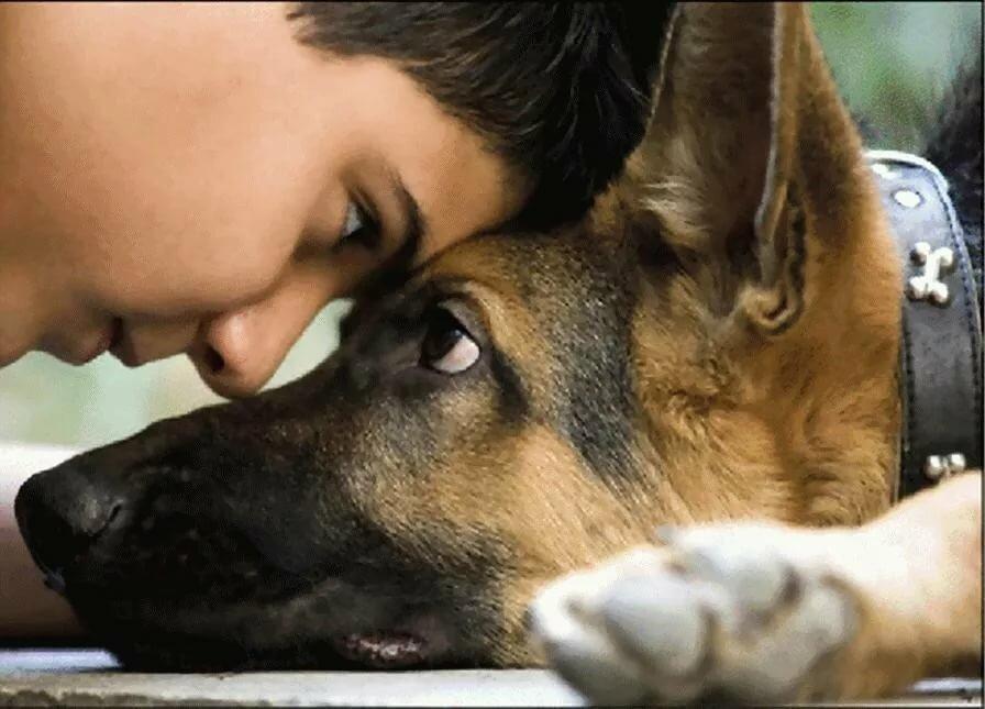Собака-друг человека картинка