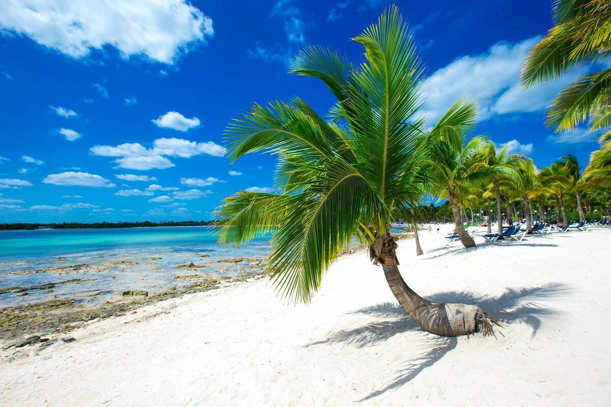 сами картинка море с пальмами большого разрешения рассказам, зеленский