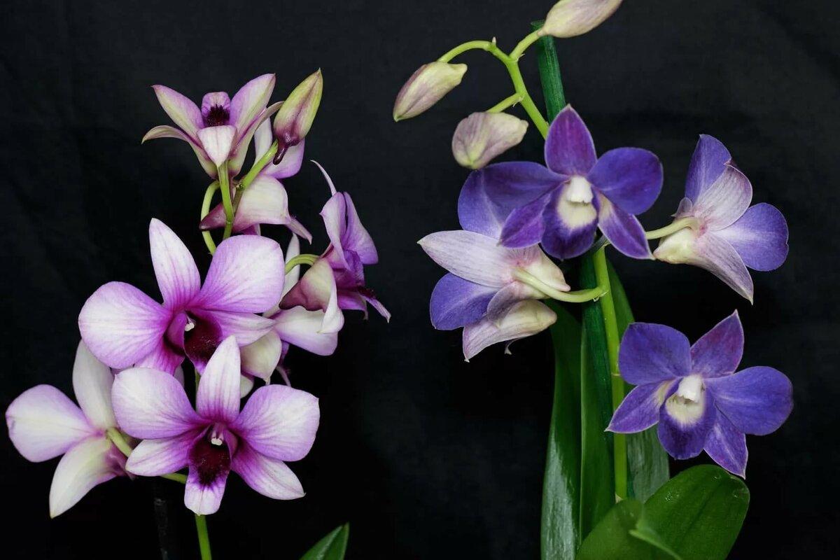 Виды и сорта орхидей с фото и названиями технологически сложный