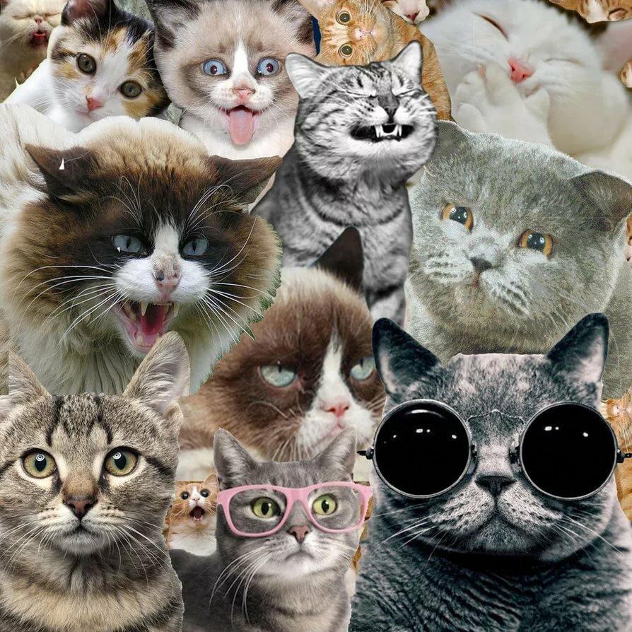 много картинок в одной картинке с котятами оригинальность молодожёнов поможет