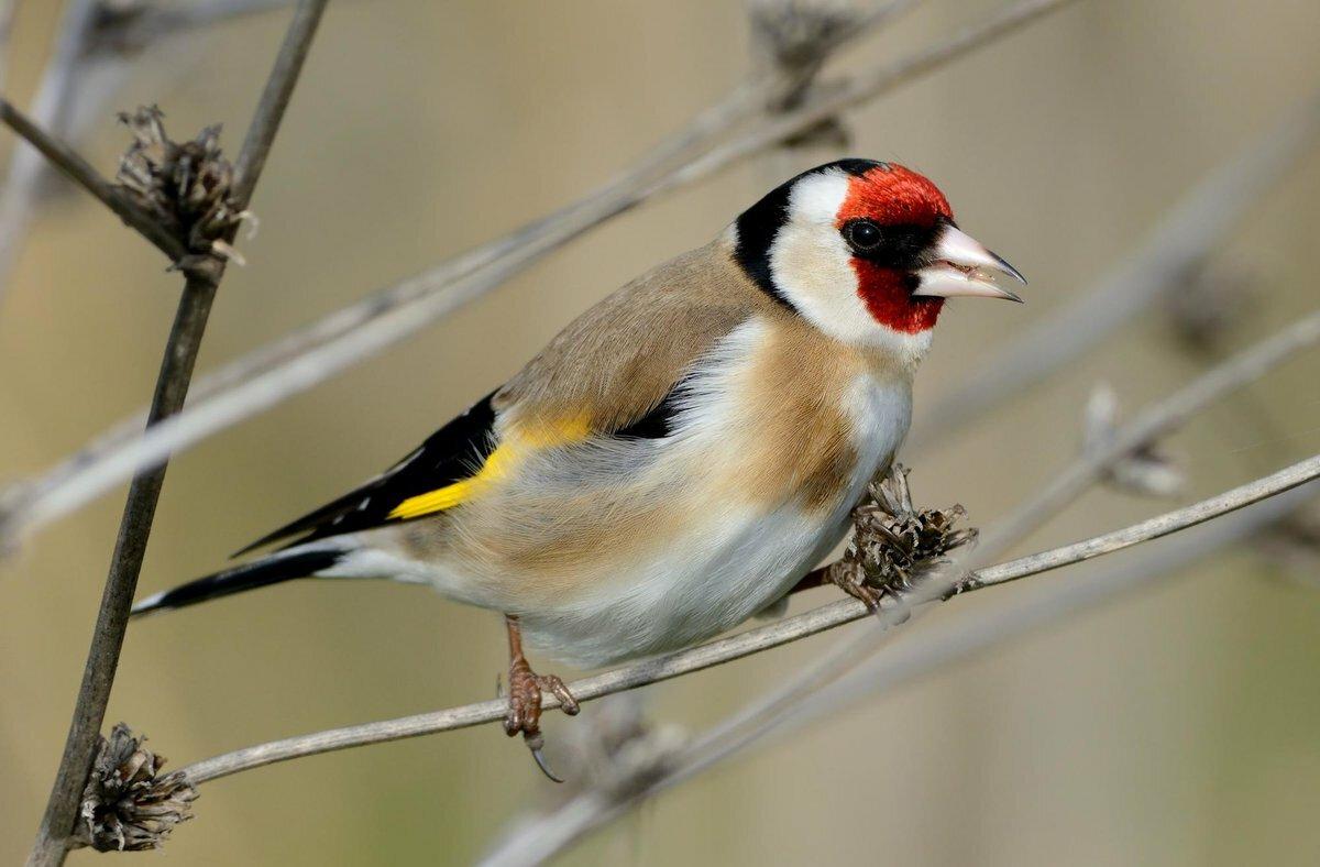 фактура фото и названия лесных птиц сорок лет