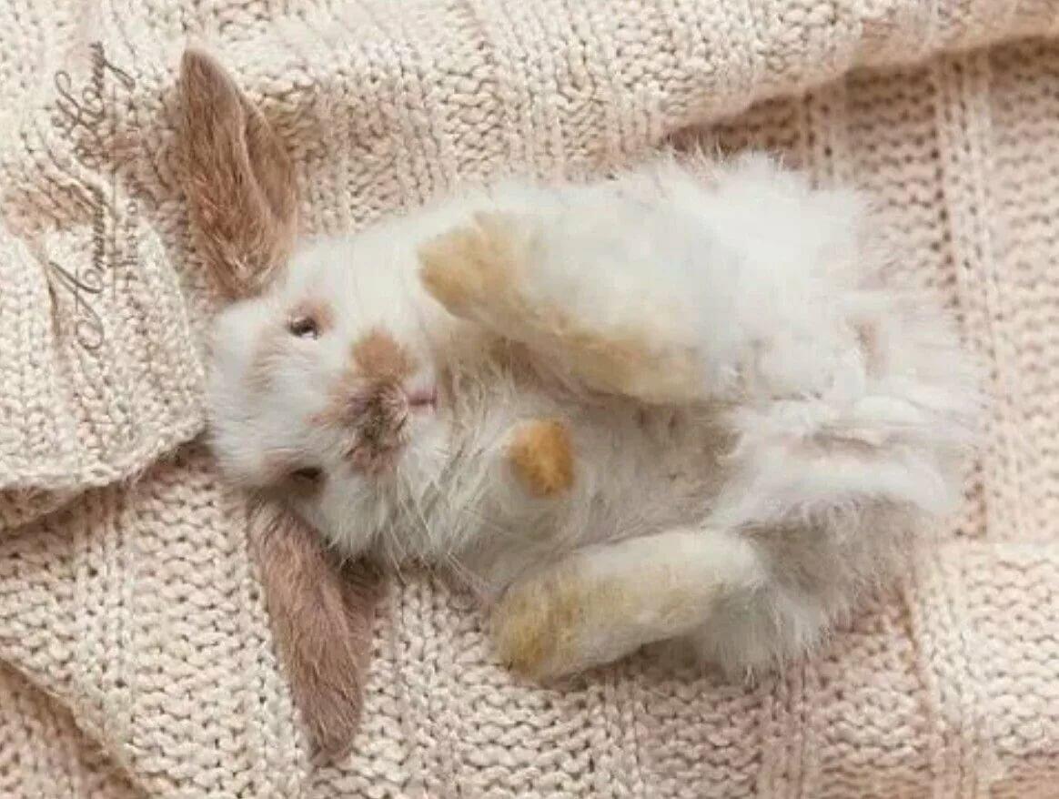 картинка зайцы на диване мой телефон постоянно