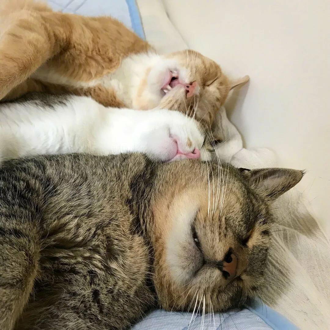Поздравления, спим вместе прикольные картинки