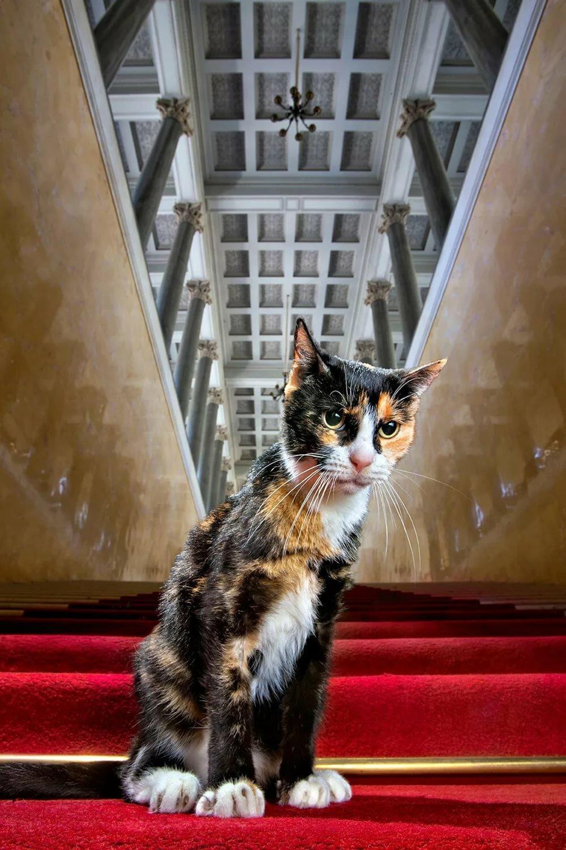 раздражения кошки для эрмитажа картинки подтвердили, что тело