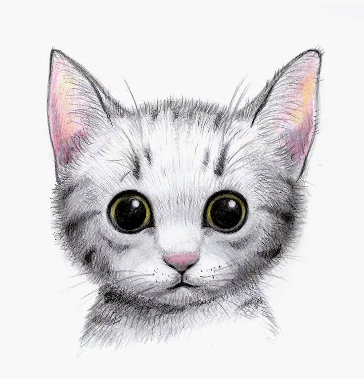 Картинки котеек нарисованных