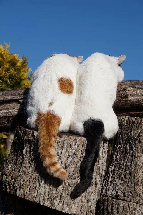 840) Pinterest кошки и все все все.... Постила