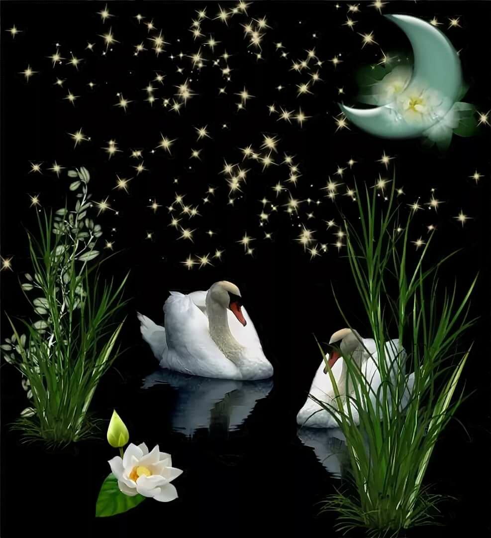 Открытка доброй ночи с лебедями, паинте