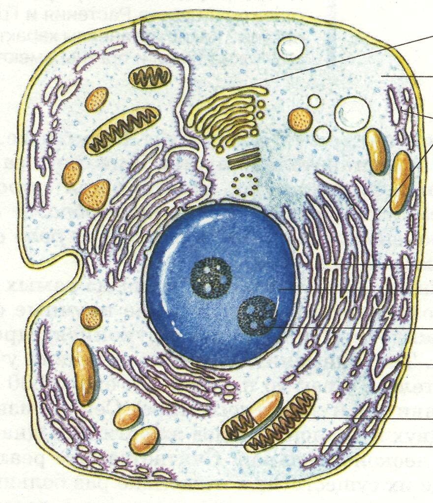 смерть картинка про клетку хватило