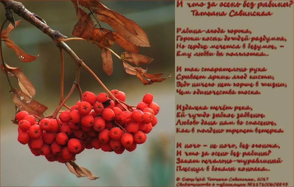Рябина стихи русских поэтов