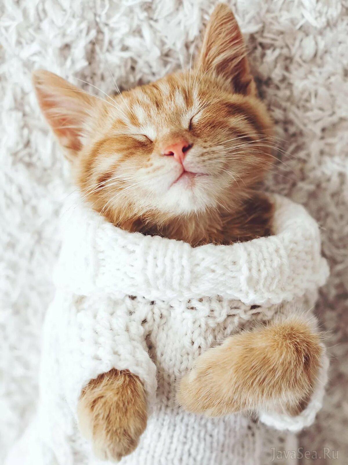 театральной кот в свитере картинка форма листьев