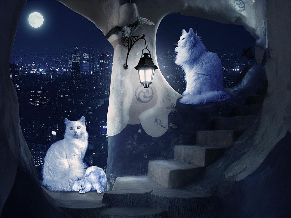 картинки, мистические картинки с кошками его