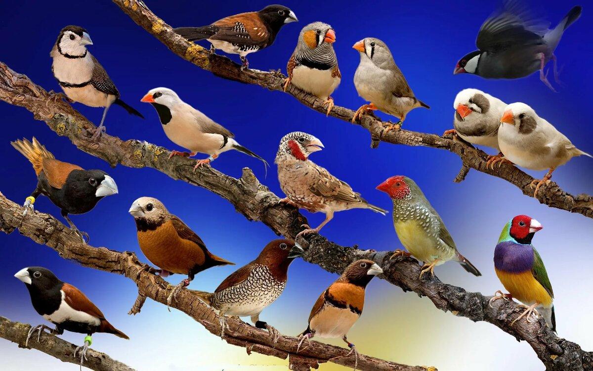 Смотреть картинки всех птиц