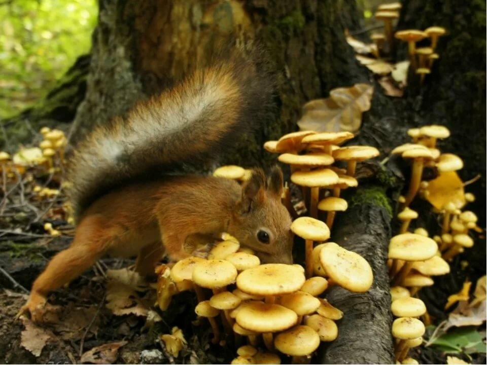 белка и грибы фото о-ве