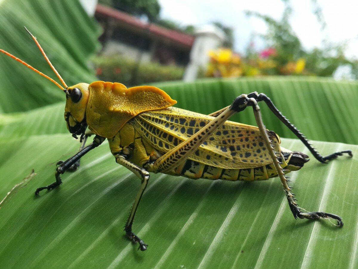 подборка фотки насекомых разных приема