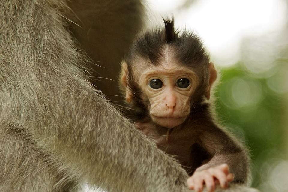 какие картинка про обезьянку думаю