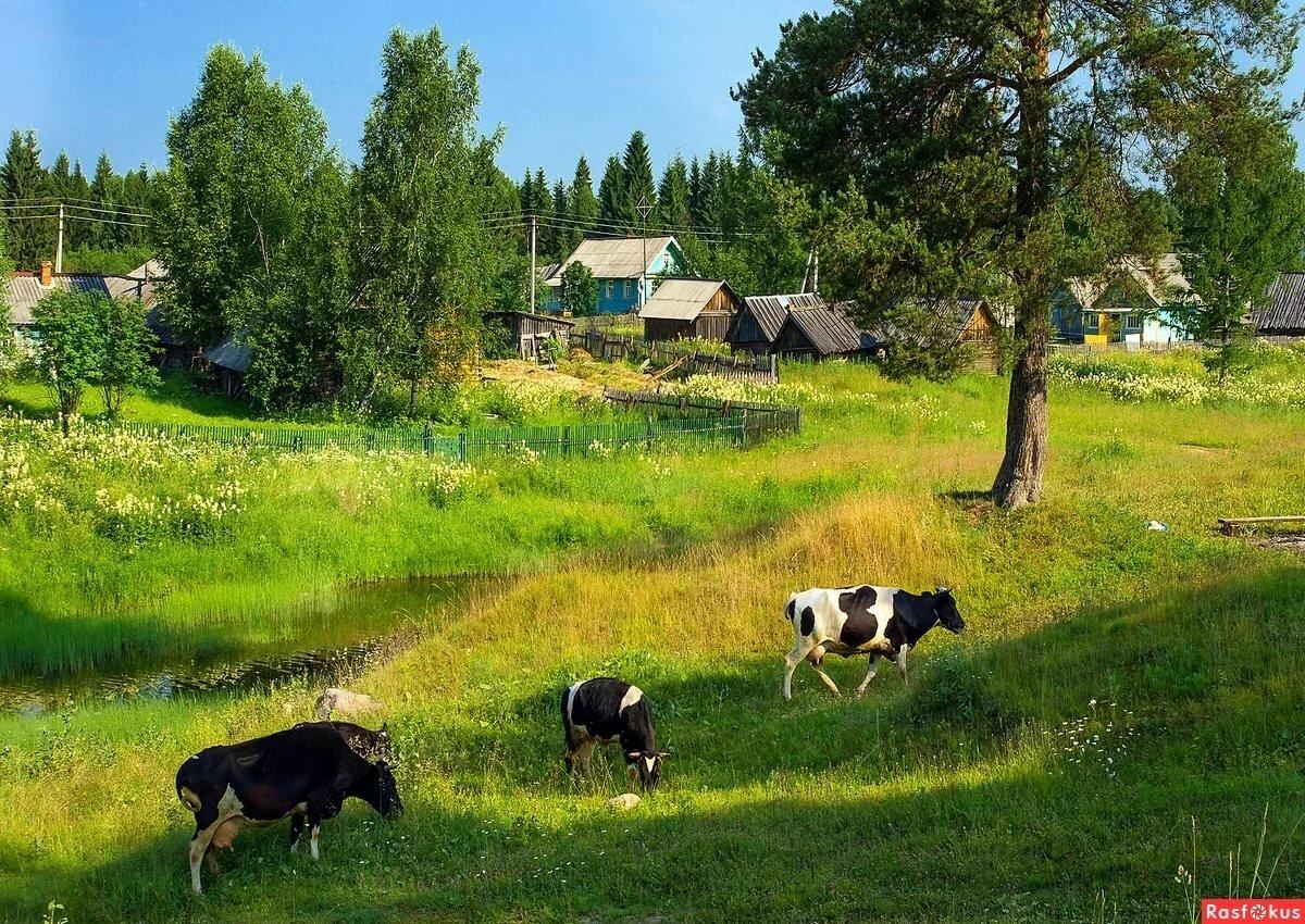 фотографии лета в деревне живут черные