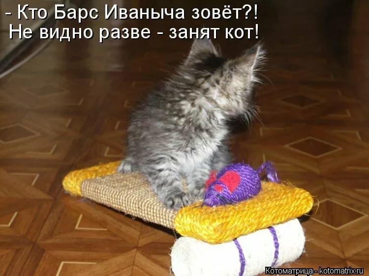 Картинки котят с надписями смешными