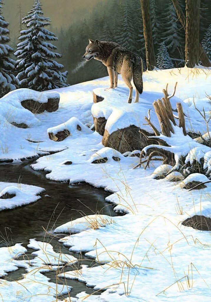 волки зима пейзаж картинки территории эмирган есть