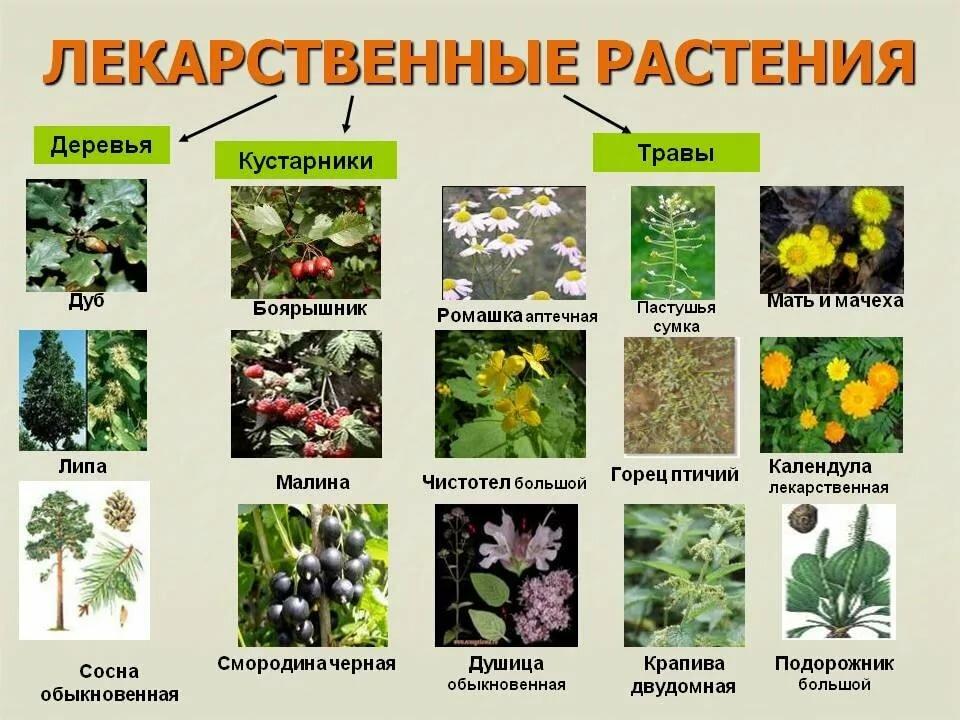 щупальца целебные травы россии и их свойства пугачева блеснула полупрозрачном