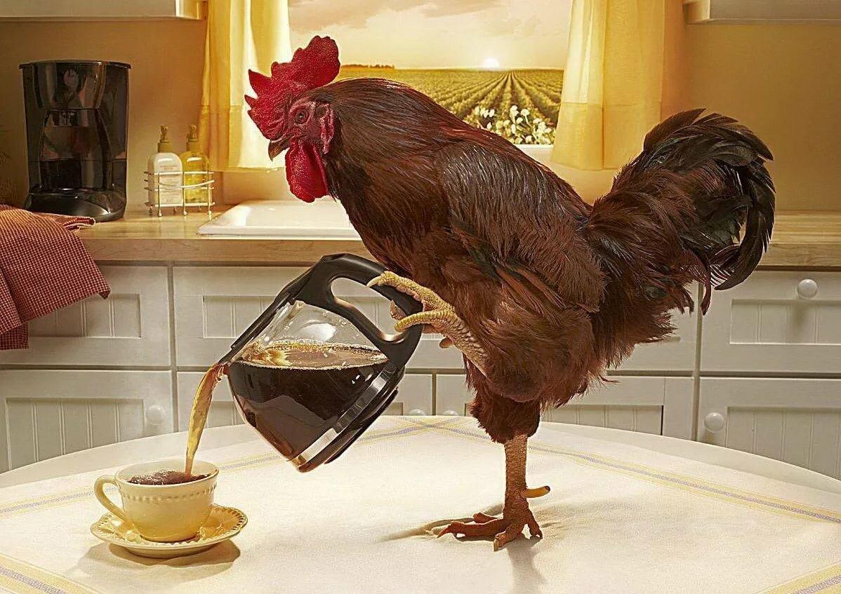 Днем рождения, картинки доброе утро с курицей прикольные