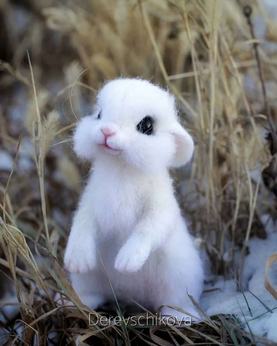 картинки милые очень милые животные александр