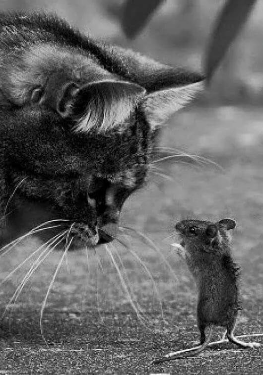 Картинки с кошкой и мышами