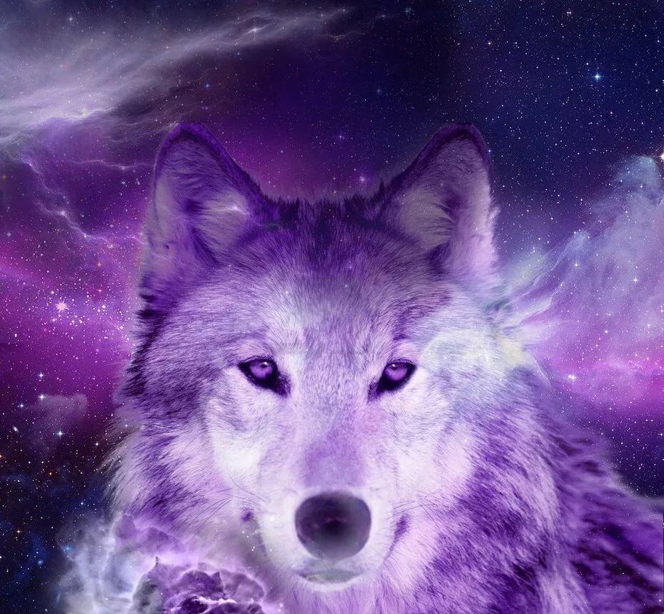 Волки топ картинки