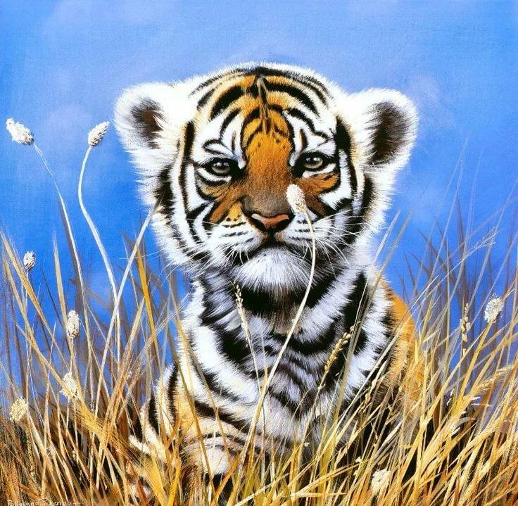 Красивые рисунки тигренка