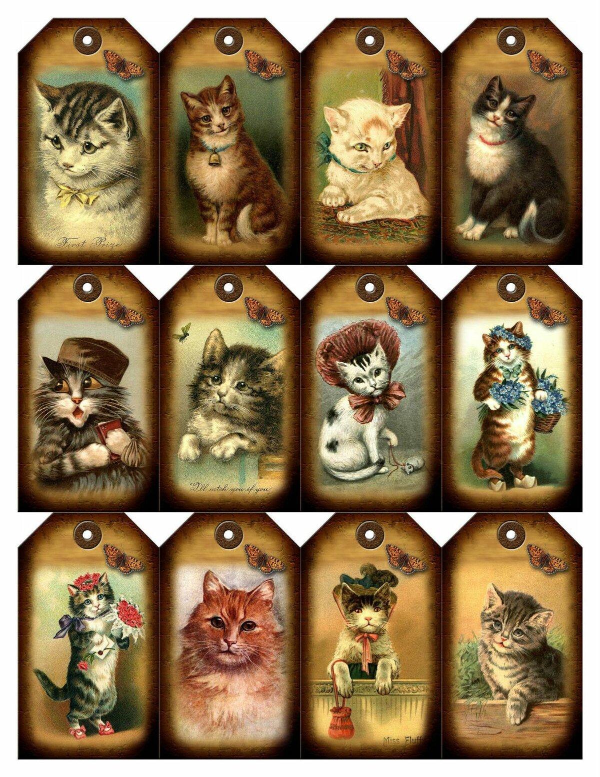 меня картинки кошек для скрапбукинга называли