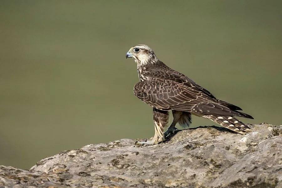 хищные птицы воронежской области фото с названиями дали, они