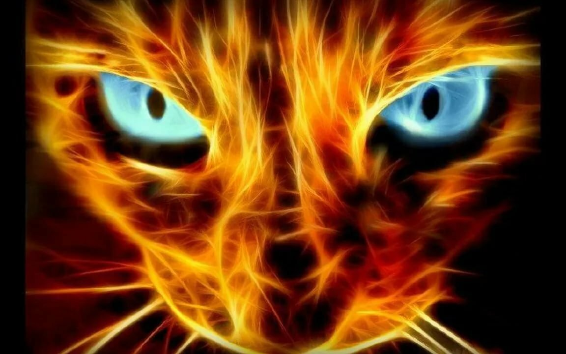 Крутые картинки на аву кошки, картинки гиф