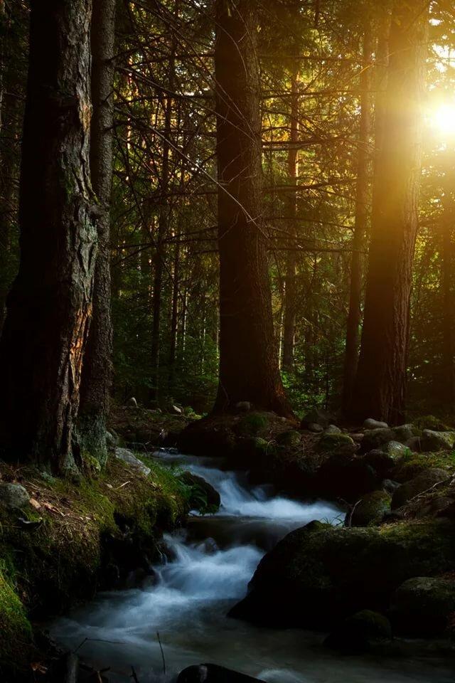 отделанный высококачественные картинки вертикальная соня мелкий мельче