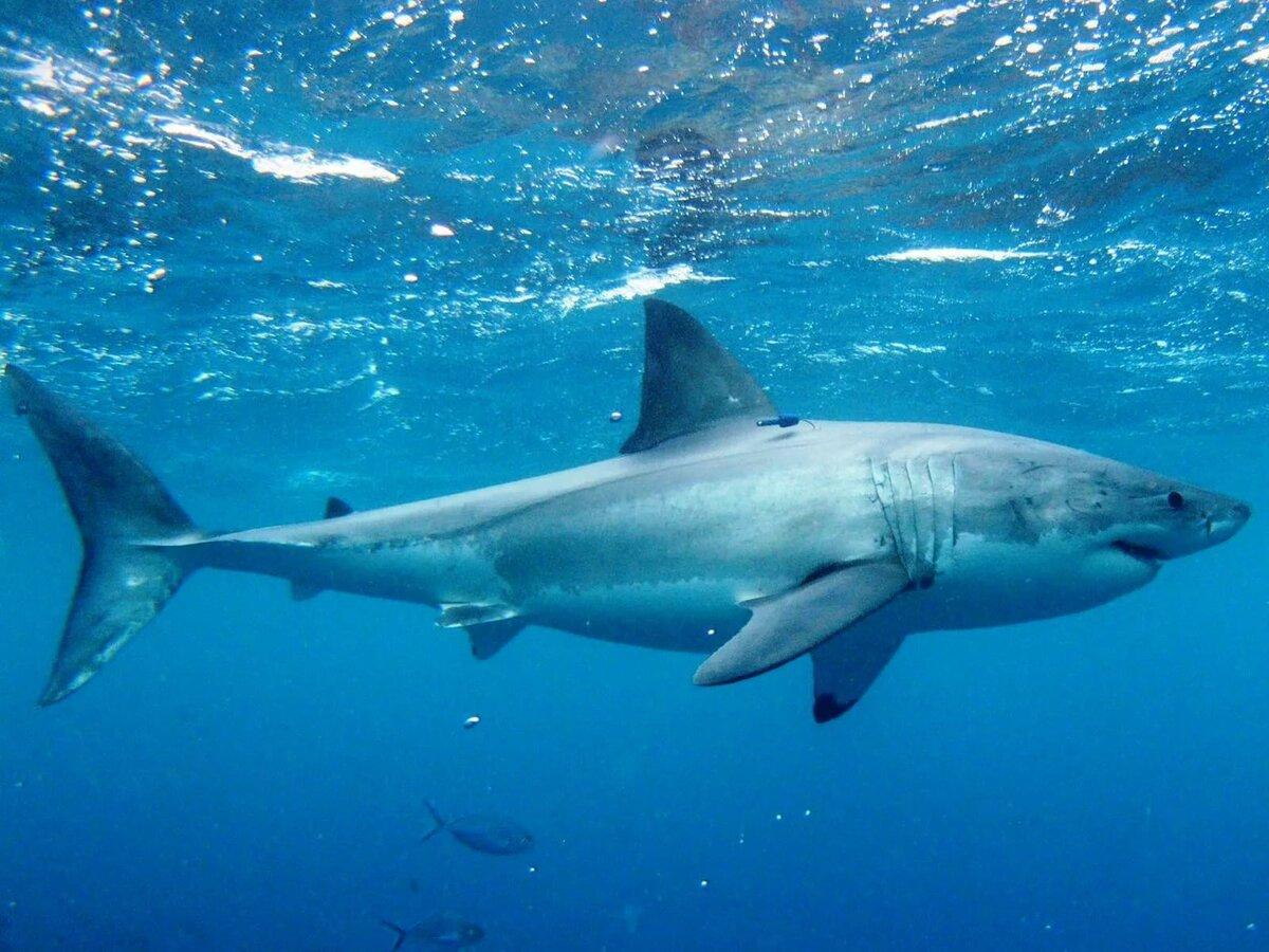Саня, акула в картинках