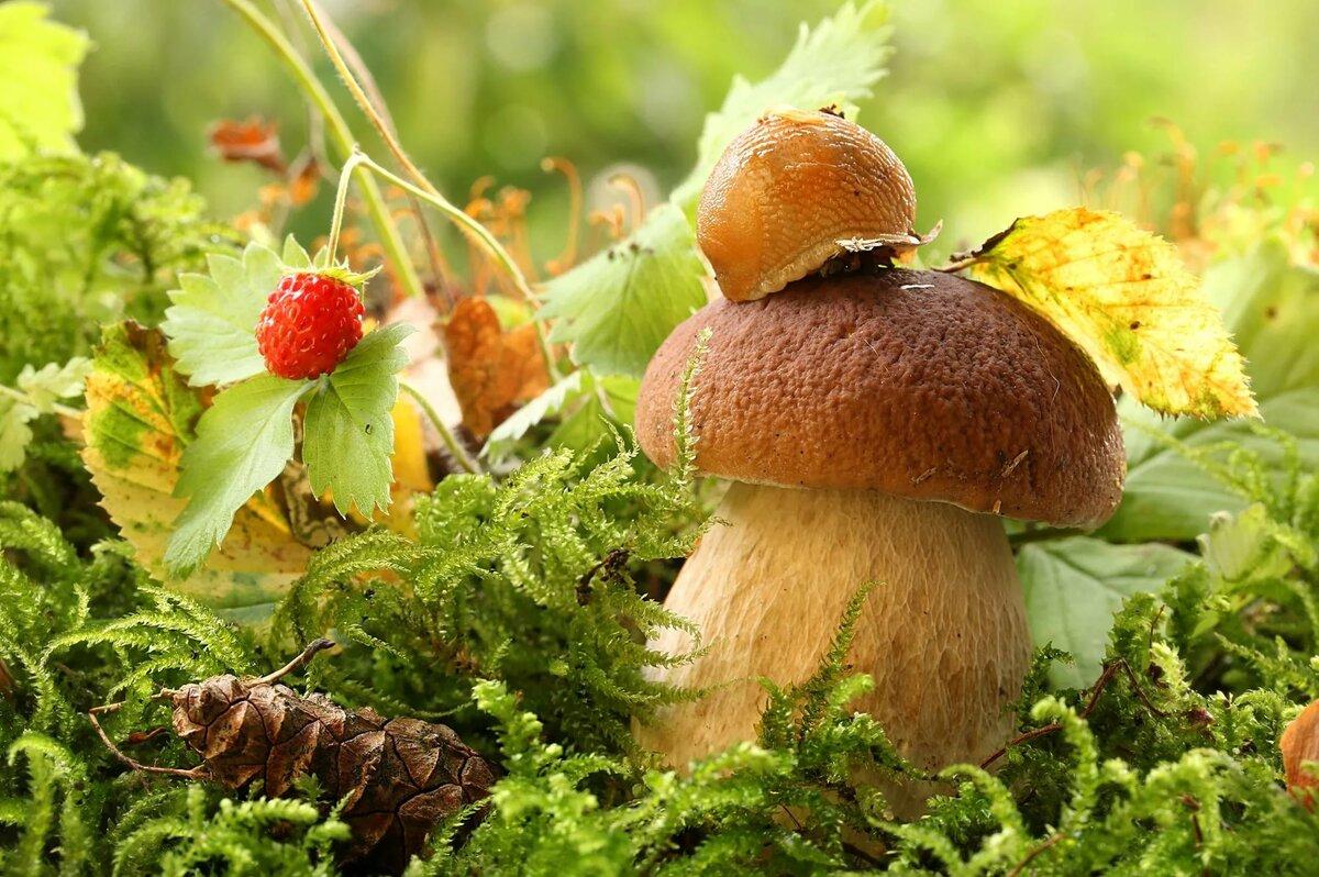 картинка осеннего леса с грибами и ягодами являются санитарами леса
