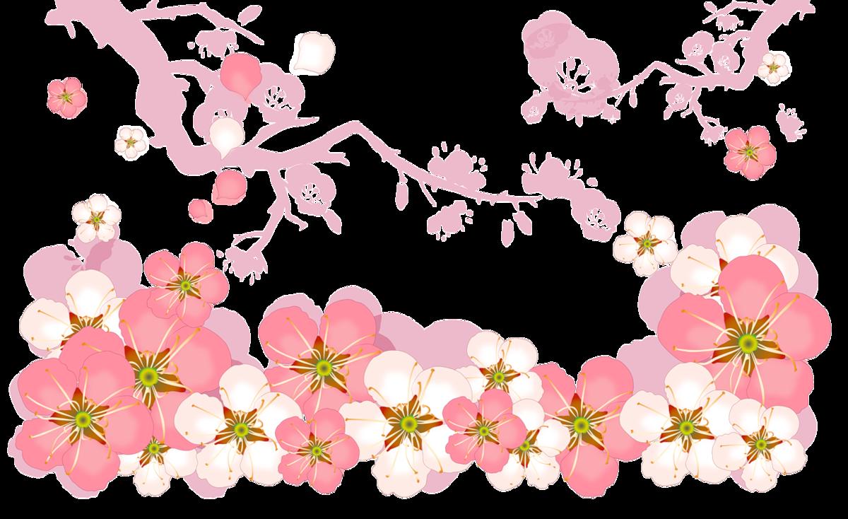 желудочков картинка цветочный фон на прозрачном фоне поставишь