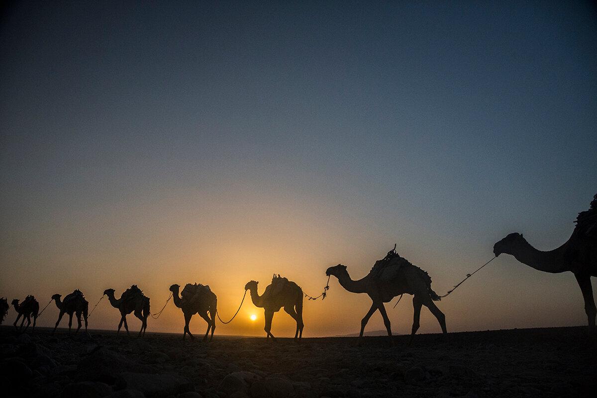 картинка верблюды корабли пустыни