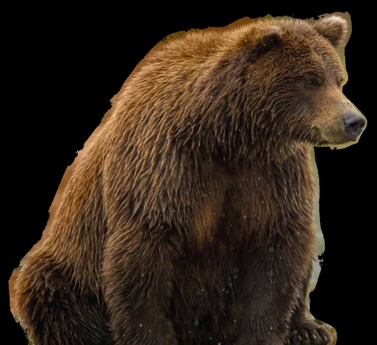 Поздравления марта, медведь в картинках для детей
