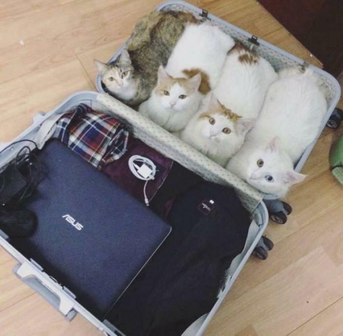 Свитков, картинки смешные чемодан