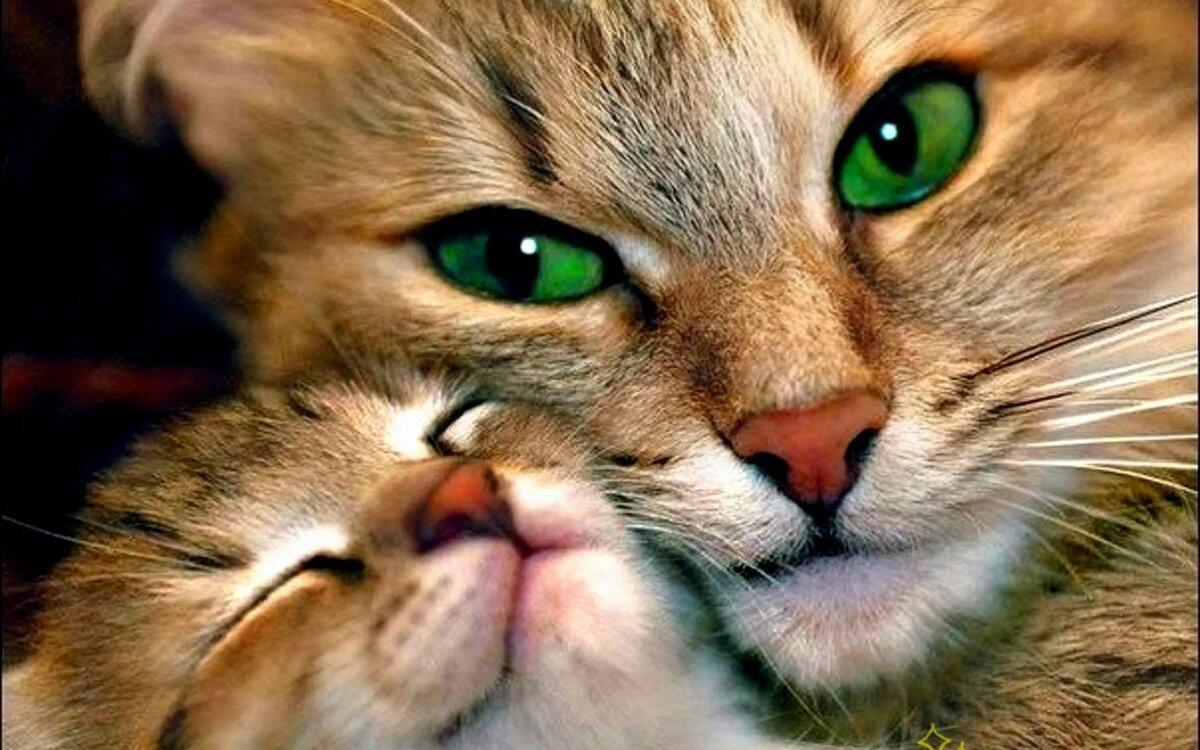 Картинки про, фото на аву животные прикольные