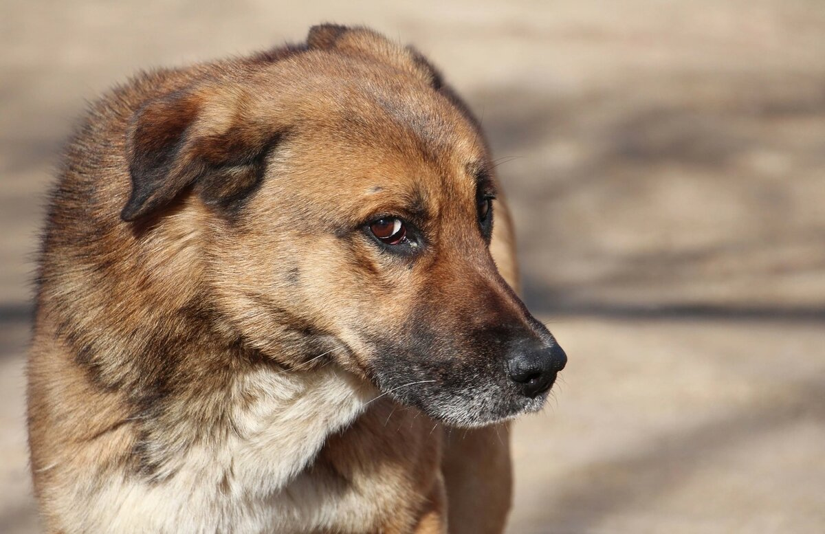 порода собак дворняжка фото этого