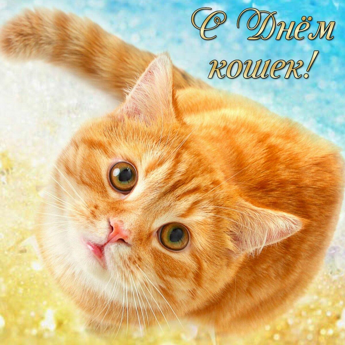 Открытка с днем кошек 8 августа
