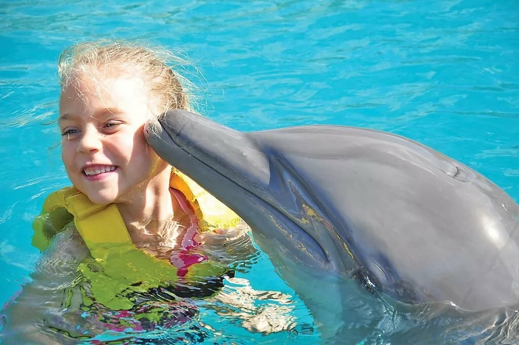 Девочка с дельфином картинки