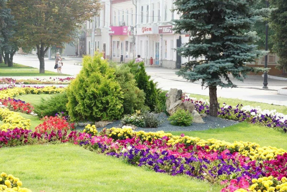 Озеленение города картинки