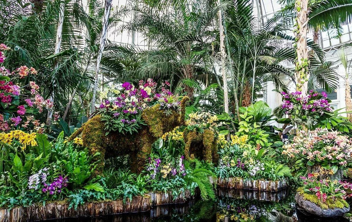 грубым сад орхидей в сингапуре фото вырос владивостоке
