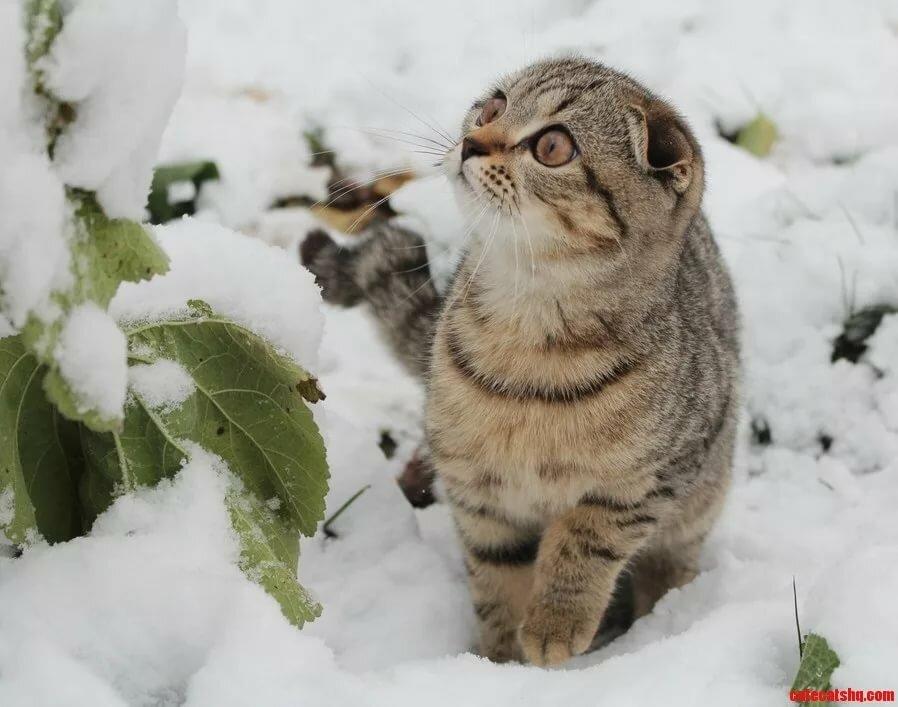 Коты картинки в снегу
