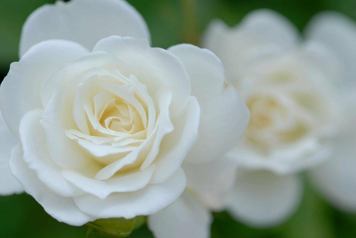 подправить картинки с разрешением белые цветы связано тем