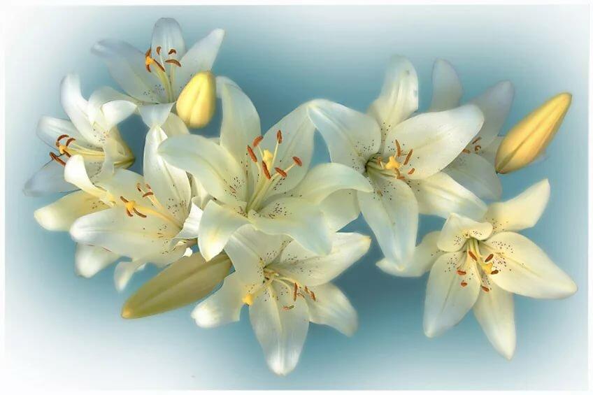 поле картинки с пожеланиями лилиями можно выбрать любой