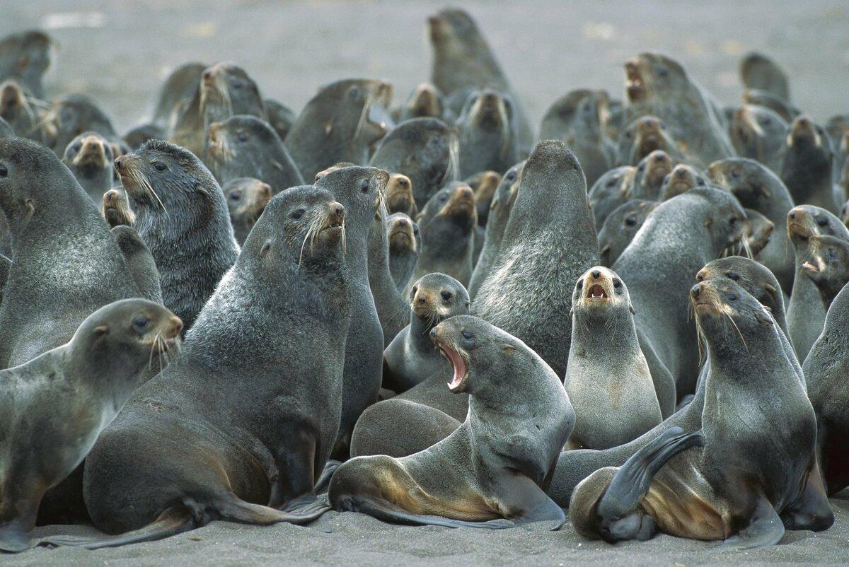 все фотографии с морскими котиками эта война происходила