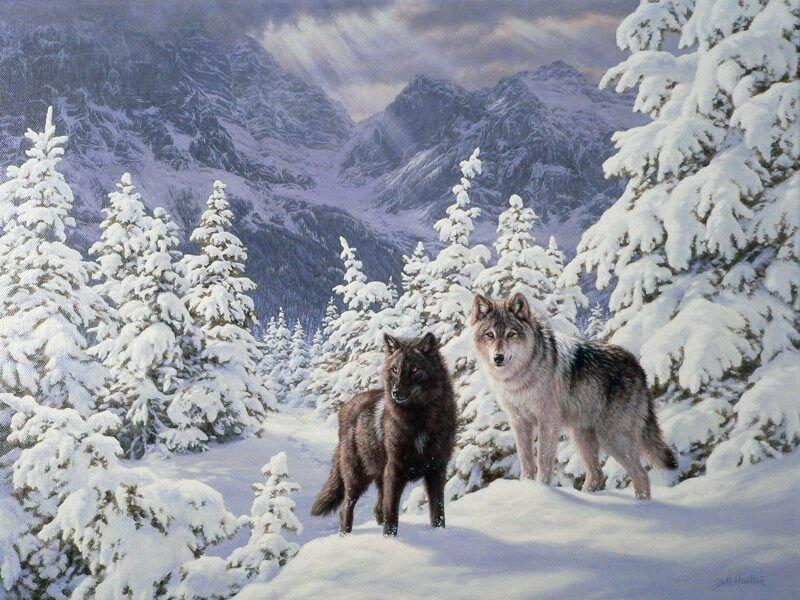 если волки зима пейзаж картинки графические